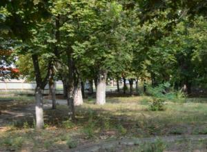 Чтобы посчитать деревья микрорайона Октябрьский Новочеркасску нужно почти пол миллиона