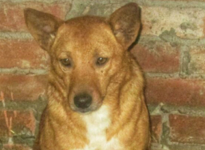Умная и воспитанная собака ищет новый дом под Новочеркасском