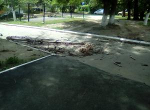 Резкий порывистый ветер повалил несколько десятков деревьев в Новочеркасске