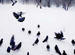 Синоптики обещают снег и небольшой потепление в предстоящий уик-энд в Новочеркасске