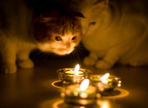 Рабочая суббота пройдет без электричества для многих жителей Новочеркасска