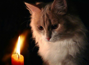 Рабочая неделя начнется с отключения электричества для жителей 9 улиц Новочеркасска