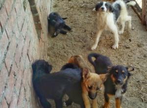 Самые одинокие сердца новочеркасского приюта для собак