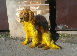 Разукрашенная в желтый цвет собака появилась на улицах Новочеркасска