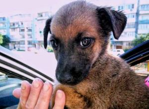 Новый обитатель новочеркасского приюта для собак ищет дом