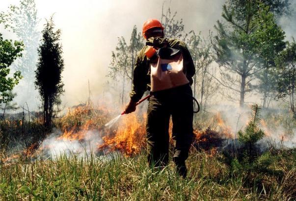 Новочеркасцев просят не разводить костры и не поджигать сухую траву