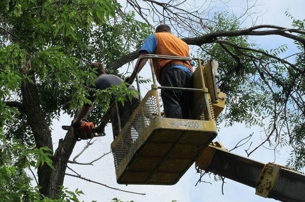 В Новочеркасске пилить деревья и косить траву будет местный предприниматель