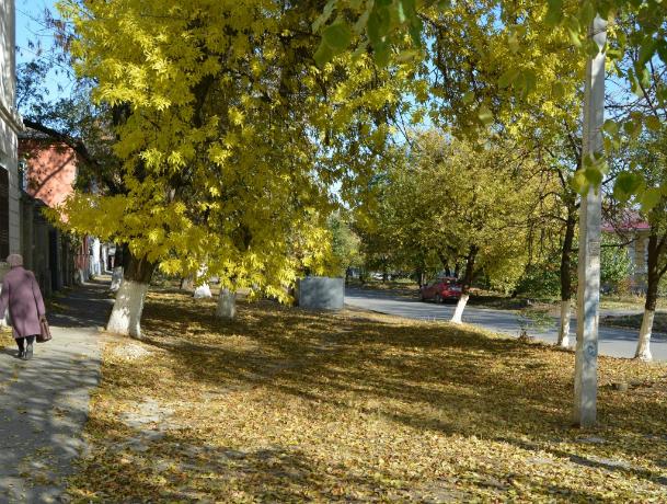 Первые выходные осени в Новочеркасске станут облачными и ветреными