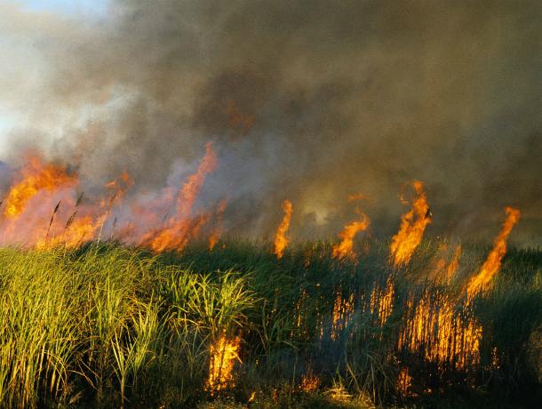 В Новочеркасске введен противопожарный режим