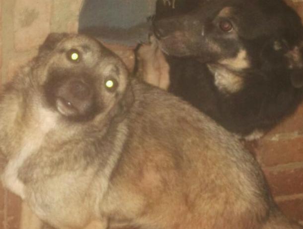 Две лохматые сестрички Таша и Глаша ищут семью в Новочеркасске