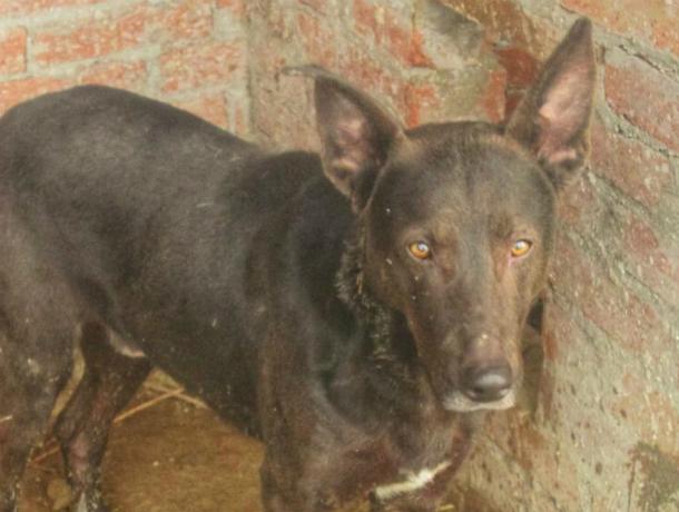 Пес с невероятными глазами ищет новый дом в Новочеркасске