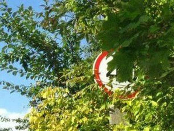 «Работы по опиловке деревьев были запланированы до поступления прокурорского представления», - администрация Новочеркасска