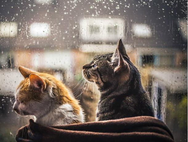 Предстоящий уик-энд принесет Новочеркасску небольшой дождь