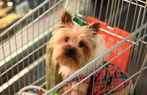 В Новочеркасске собачники игнорируют запрет на вход в магазины с животными