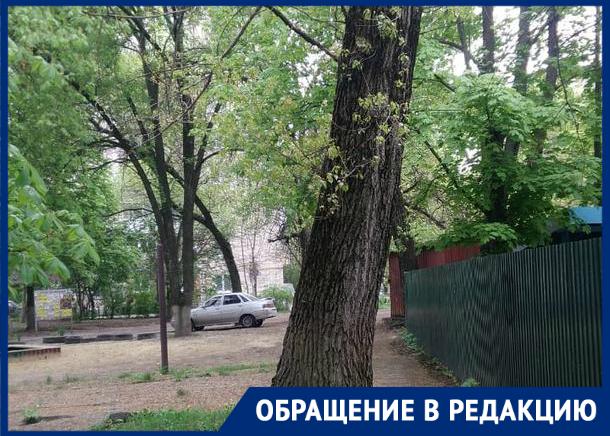 «Засохший тополь может рухнуть, не дождавшись топора дровосека», - жительница Новочеркасска