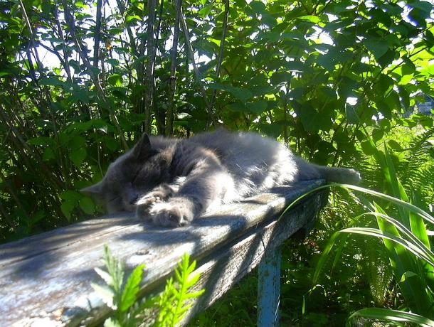 На выходных в Новочеркасске будет жарко