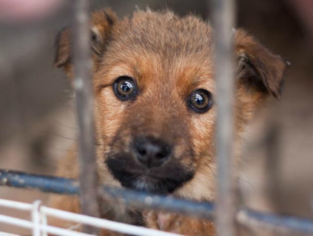Убившего 173 собаки, предпринимателя проверит администрация Новочеркасска