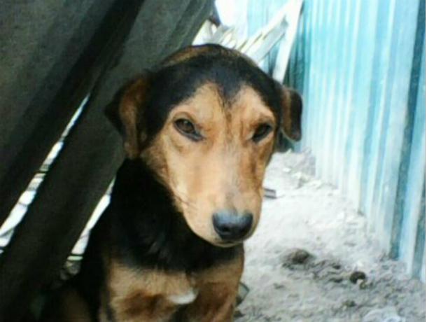 В собачьем приюте под Новочеркасском добродушный пес ищет семью