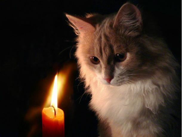 7 августа пять улиц Новочеркасска останутся без света