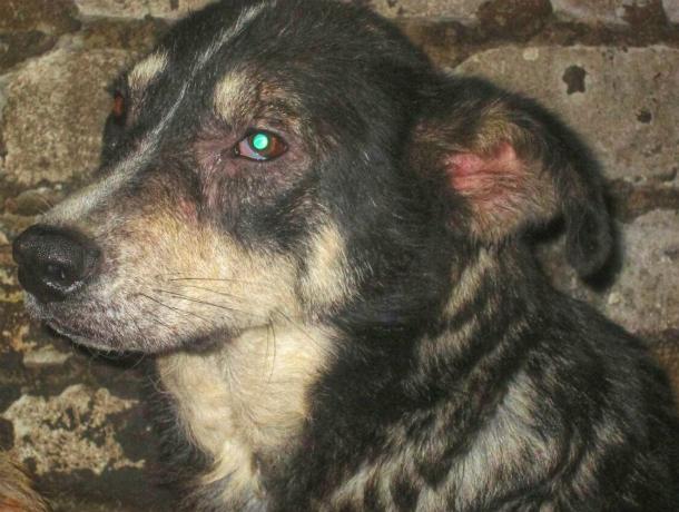 Лохматая обитательница новочеркасского приюта «DogHope» мечтает о любящей семье