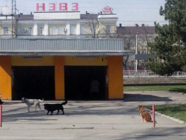Полчища злобных бродячих собак наводят ужас на жителей Новочеркасска