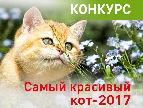 «Блокнот Новочеркасска» объявляет конкурс «Самый красивый кот-2017»
