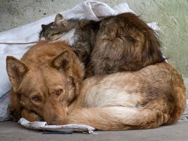 Бездомных собак и кошек в Новочеркасске будут лечить, прививать, стерилизовать и пристраивать  в добрые руки