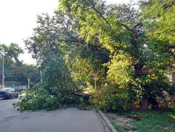 Огромное сухое дерево рухнуло на дорогу по улице Михайловской Новочеркасска