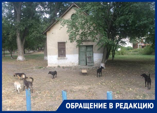 «Гуляют стаями»: новочеркасцы опять жалуются на засилье бродячих собак