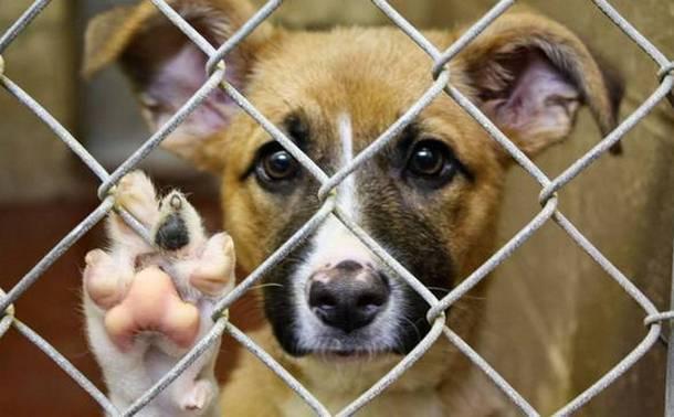 Обвиняемые в массовом убийстве собак в Новочеркасске отделались штрафом