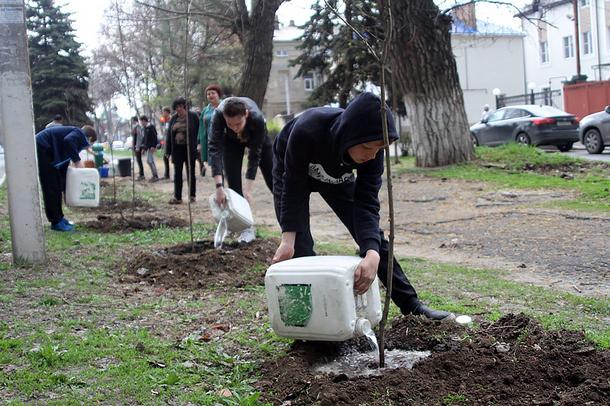 Около 4 000 растений высадили новочеркасцы на городских улицах