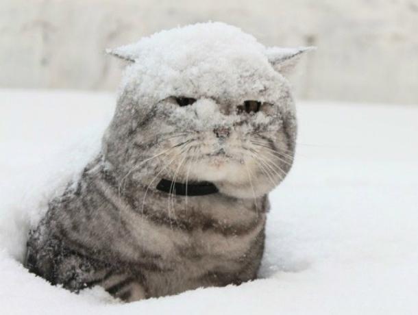 Снегопад, метель и гололед надвигаются на Новочеркасск