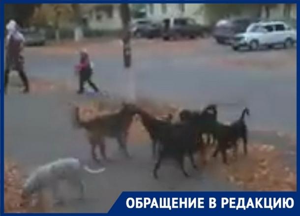 «Стая агрессивных собак бросается на детей», - новочеркасцы