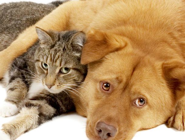Стерилизовать домашних животных со скидкой можно будет в Новочеркасске
