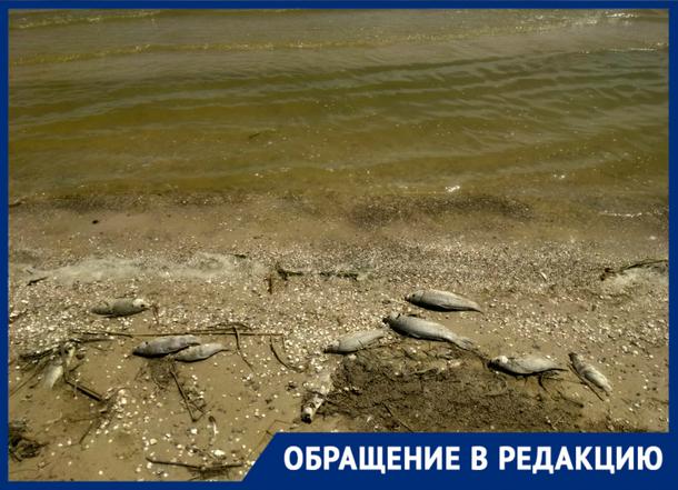 «Дохлая рыба не дала кайфануть», – новочеркасцы