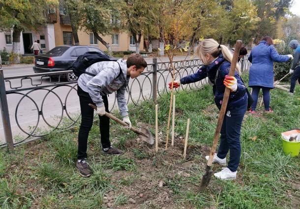 Почти тысячу деревьев высадили в Новочеркасске в осенний день древонасаждения