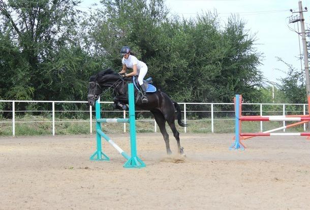 Спортсмены из Новочеркасска завоевали четыре медали по конному спорту