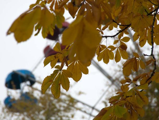 Теплая, но пасмурная погода ожидает Новочеркассцев в субботу