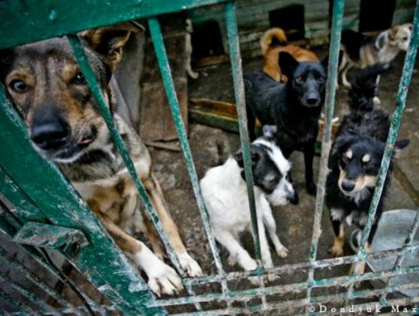 Новочеркасск не будет оплачивать работу подрядчика по отлову бездомных животных