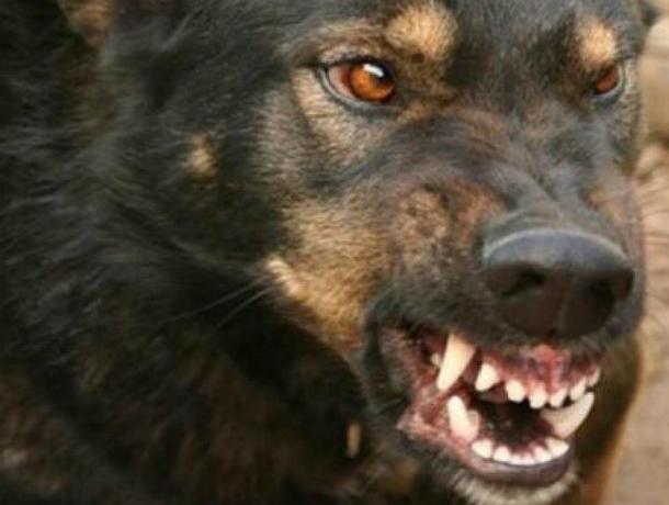 Одичавшая стая бродячих собак набросилась на пятилетнего ребенка в Новочеркасске
