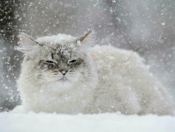 На Новочеркасск надвигается метель; ожидается туман, гололед и мокрый снег