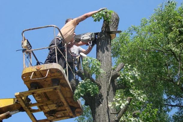 Администрация Новочеркасска добавила денег на опиловку деревьев и покос травы