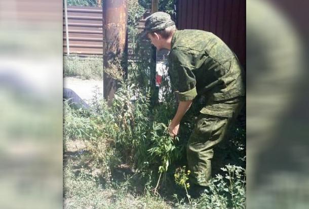 В Новочеркасске обнаружили 12 очагов дикорастущей конопли