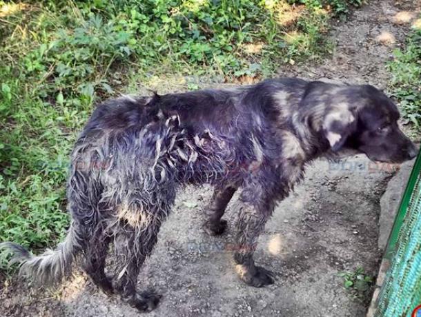 Бродячие собаки захватывают Новочеркасск