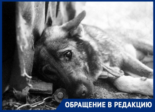«За что нас убивают?»: отравленные собаки в муках умирают на улицах Новочеркасска
