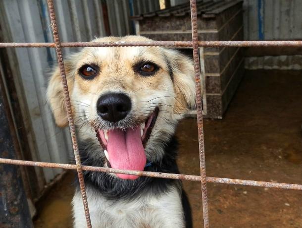 Собаку вместе со щенками засунули в мешок и бросили умирать на обочине под Новочеркасском