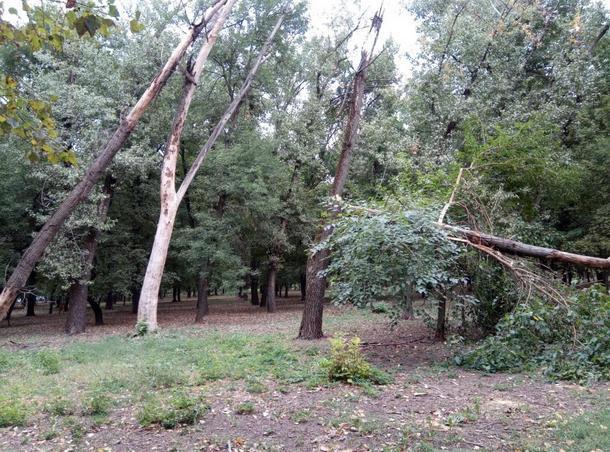 В Новочеркасске в парке микрорайона Соцгород вырубят 83 % деревьев