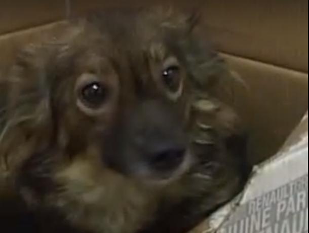 Собака футболяка поселилась в Новочеркасске