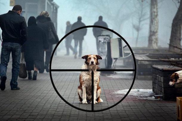 В Новочеркасске осудили мужчину, расправившегося с укусившей его собакой