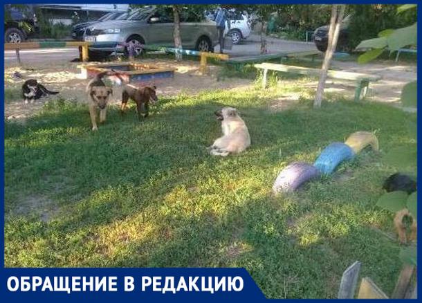 «Бродячие собаки пугают малышей», - новочеркасцы
